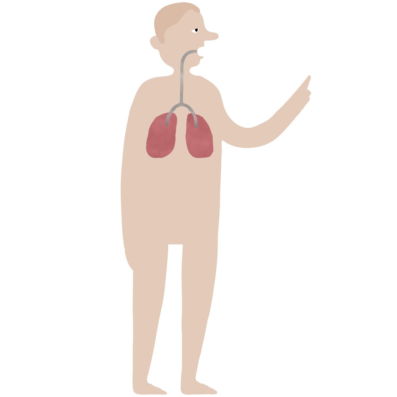 Klik på de røde prikker på figuren og se, hvad rygning gør ved kroppen