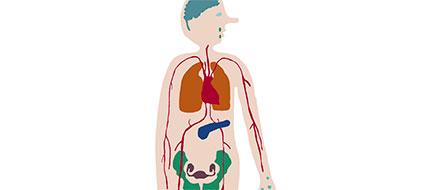 Hvad sker der med kroppen på lang sigt?
